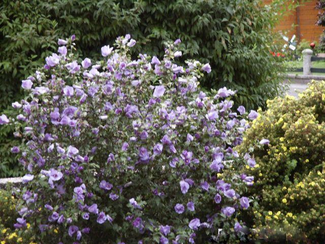 Violettes Ensemble