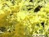 Orgie in Gelb
